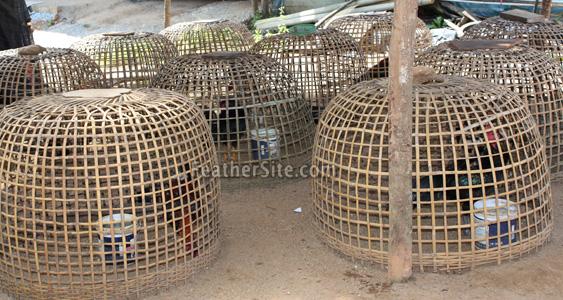 cock cage thai kong kristianstad